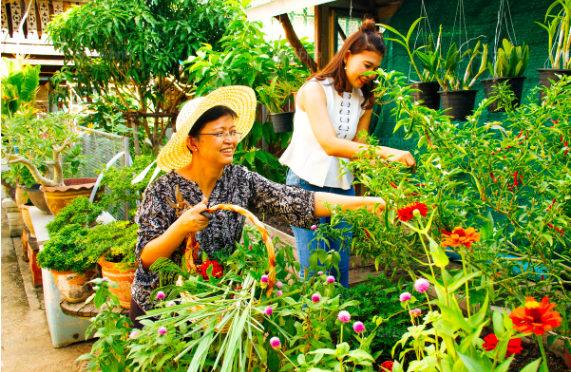 Thailand's Seniors Embracing Airbnb