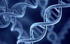 China: Tight rules on using genetic material
