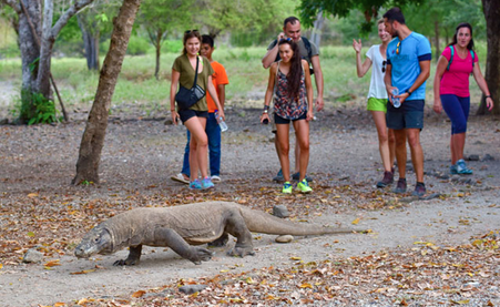 Indonesia's Komodo island to remain open
