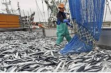 Japan: Crack-down on illegial fishing