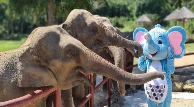 Meliá Koh Samui Helping To Feed Elephants